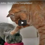 Best Funny Animal Compilation!